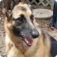 Adopt A Pet :: Chleo th - Tampa, FL