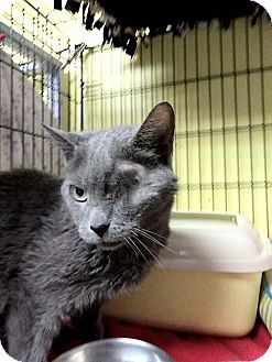 Domestic Mediumhair Cat for adoption in Milwaukee, Wisconsin - Pebbles