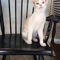 Adopt A Pet :: Deacon - Prescott, AZ