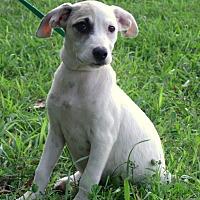 Adopt A Pet :: Kenzie - Waterbury, CT