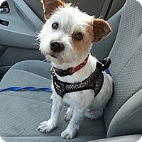 Adopt A Pet :: Picasso - Kingwood, TX