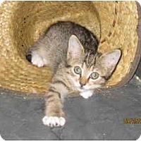 Adopt A Pet :: June - Catasauqua, PA