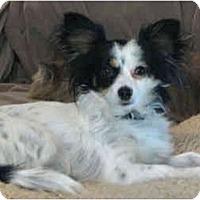 Adopt A Pet :: Poppy - Davis, CA