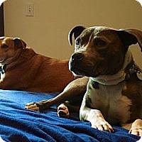 Adopt A Pet :: Hope - Los Angeles, CA