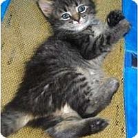 Adopt A Pet :: April - Richmond, VA