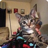 Adopt A Pet :: Tess - Pittstown, NJ