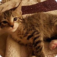 Adopt A Pet :: Mookie - San Fernando Valley, CA