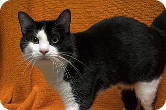Domestic Shorthair Cat for adoption in Fremont, Nebraska - Jack