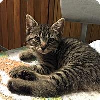 Adopt A Pet :: Mocha - Byron Center, MI