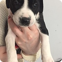 Adopt A Pet :: Harvest - Burlington, NJ