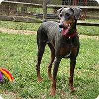 Adopt A Pet :: SINEAD - Greensboro, NC