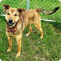 Adopt A Pet :: Guinness - Terrell, TX