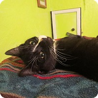 Adopt A Pet :: Star - Coos Bay, OR