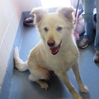 Adopt A Pet :: Pound Dog 143608 - Rootstown, OH