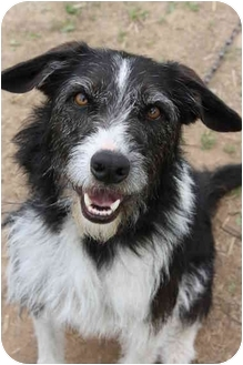 Border Collie/Terrier (Unknown Type, Medium) Mix Dog for adoption in Waterloo, New York - Joaboa