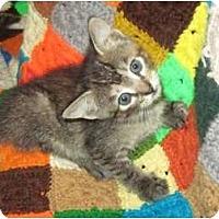 Adopt A Pet :: Pixie - Mobile, AL