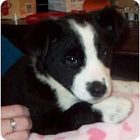 Adopt A Pet :: TEBOW (Adoption Pending) - Southport, NC