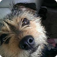 Adopt A Pet :: Bella - Bristol, TN