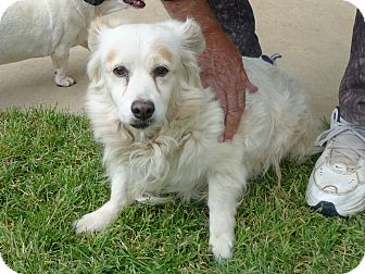 Collie Mix Dog for adoption in Simi Valley, California - Pearly