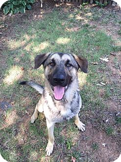 German Shepherd Dog Mix Dog for adoption in Milton, New York - Blue