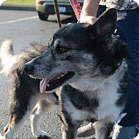 Adopt A Pet :: Koda - Hopkinsville, KY