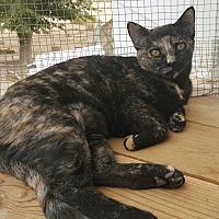 Adopt A Pet :: Pumpkin - San Fernando Valley, CA