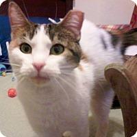 Adopt A Pet :: Sibyll - St. Louis, MO