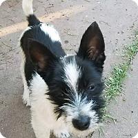 Adopt A Pet :: Casper - Lodi, CA
