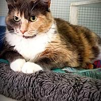 Adopt A Pet :: Trinity - Hampton, VA