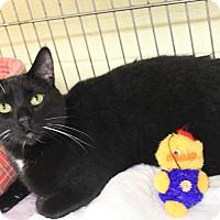Adopt A Pet :: Valentino - Euclid, OH
