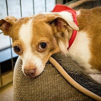 Adopt A Pet :: Idaho - Claremont - Chino Hills, CA