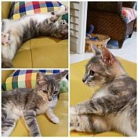 Adopt A Pet :: Montana - Naples, FL