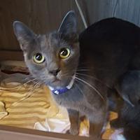 Adopt A Pet :: Hale - Colorado Springs, CO