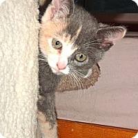 Adopt A Pet :: Lexi - Escondido, CA