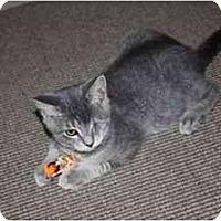Adopt A Pet :: Baxter--PETSMART - Muncie, IN