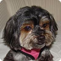 Adopt A Pet :: Blu - Orange, CA