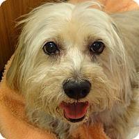Adopt A Pet :: Suzie - Shawnee Mission, KS