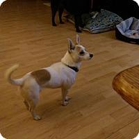Adopt A Pet :: Gizmo - Chesterfield, VA