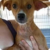 Adopt A Pet :: Aife - Gainesville, FL