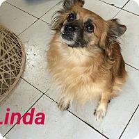 Adopt A Pet :: Linda - Pembroke pInes, FL
