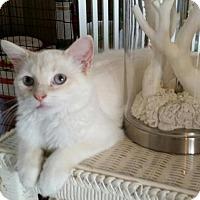 Adopt A Pet :: Victoria - Port Republic, MD