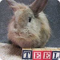 Adopt A Pet :: Teela - Newport, DE