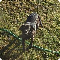Adopt A Pet :: Buster - Chewelah, WA