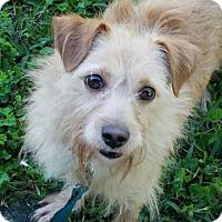 Adopt A Pet :: WOODY - Terra Ceia, FL