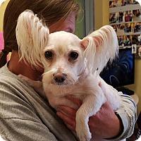 Adopt A Pet :: Mickie-D - Crump, TN