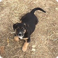 Adopt A Pet :: Archie - Providence, RI