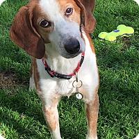 Adopt A Pet :: Marty - Virginia Beach, VA