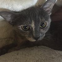Adopt A Pet :: Cora - Scottsdale, AZ