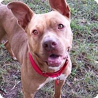 Adopt A Pet :: Kallisto - Grayslake, IL