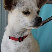 Adopt A Pet :: Brumby - Elk Grove, CA